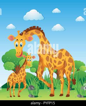 Due giraffe nel campo immagine Foto Stock