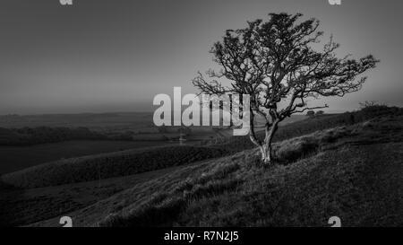 Vento spazzata di albero in bianco e nero a Farthing comune su North Downs modo campagna di Kent Foto Stock