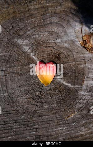 A forma di cuore di petali di rose sul tronco di un albero Foto Stock