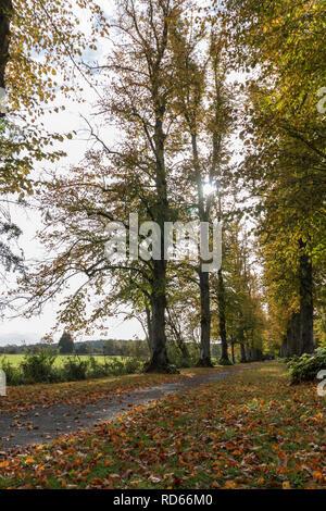 Il percorso che conduce attraverso una fila di alberi in autunno Foto Stock