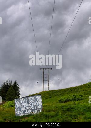 Oban, Scotland, Regno Unito - 22 Giugno 2014: un segno in un campo di pascolo chiede ai conducenti di prestare attenzione dei capi di bestiame, sotto le linee di alimentazione che conduce dal Cruachan Power s Foto Stock