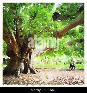 Per gli amanti del jogging dall'albero effetto acquerello Foto Stock