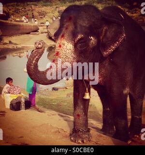Lakshmi l'elefante Foto Stock