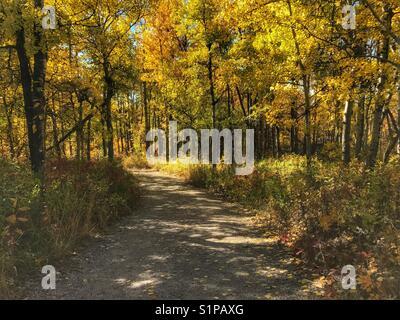 Percorso attraverso gli alberi autunnali, al ranch di glenbow provincial park, vicino a Calgary, Alberta, Canada. Foto Stock
