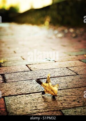 La mattina di autunno Foto Stock