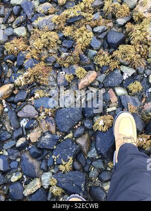 Andare con il camel boots su pietre nere Foto Stock