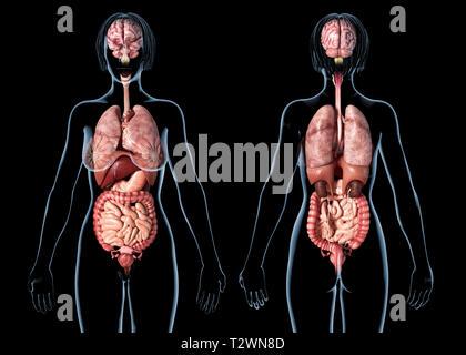 Donna anatomia degli organi interni, posteriore e anteriore viste. Su sfondo nero. Foto Stock