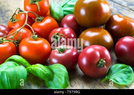 Gustoso colorato pomodori organici di diversi tipi circondato da foglie di basilico fresco su una tavola in legno rustico Foto Stock