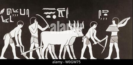 Semina e aratura in antico Egitto. Da una stampa contemporanea, c.1935. Foto Stock