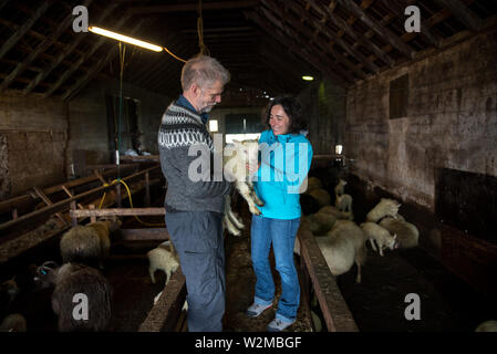 GRUNDARFJORDUR, Islanda - 19 Maggio 2019: allevatore locale che mostra un neonato Icelandic Sheep per un turista ragazza in una fase di stallo Foto Stock