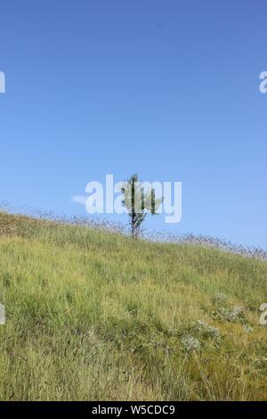 Lone Tree sul prato di collina Foto Stock