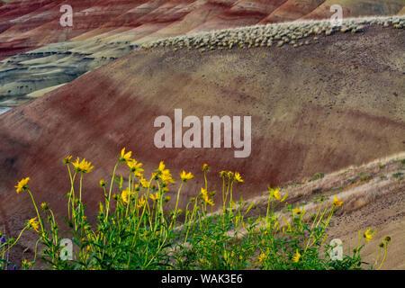 Fiori gialli, colline dipinte, John Day Fossil Beds National Monument, Mitchell, Oregon, Stati Uniti d'America. Foto Stock
