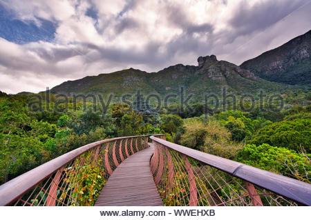 Percorso di legno attraverso la foresta e la montagna Foto Stock