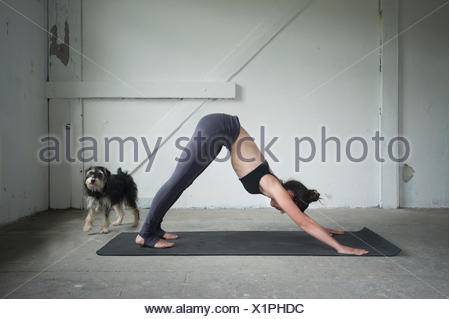 Metà donna adulta pratica cane con la testa in giù pongono in studio di yoga, Monaco di Baviera, Germania Foto Stock