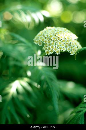 Testa di fiori e foglie in presenza di luce solare Foto Stock