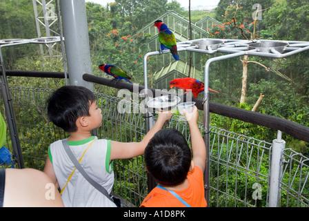 Alimentazione dei pappagalli nel famoso JURONG BIRDPARK SINGAPORE lory lori lorikeet loft Asia enorme voliera ponte Foto Stock