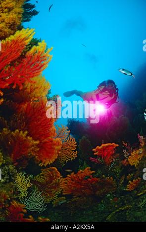 Subacqueo con colorfull parete e rosso-gorgonie Paramuricea clavata Foto Stock