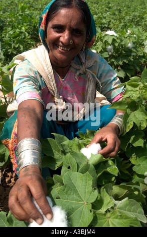 Agricoltore Guajarat in India cresce il cotone che lei vende sotto il regime di commercio equosolidale a Marks & Foto Stock