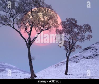 GB - Scozia: Inverno in Glen Lochsie Foto Stock