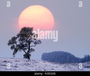 GB - Scozia: Inverno in Glen Lochsie Foto Stock