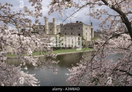 Il Castello di Leeds incorniciato dalla molla blossom Foto Stock