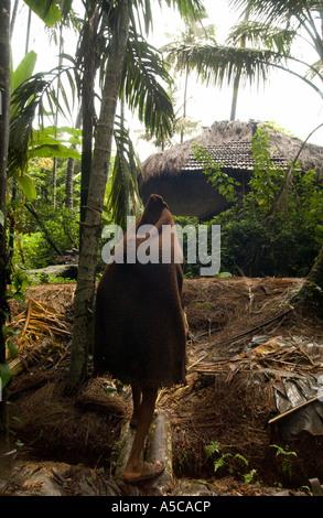 La vaniglia agricoltore in India si ripara dalla pioggia Foto Stock