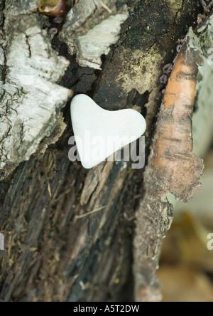 A forma di cuore sulla pietra di corteccia Foto Stock