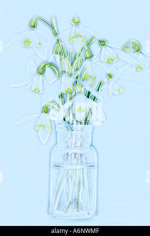 Snowdrop fiori in una bottiglia di vetro