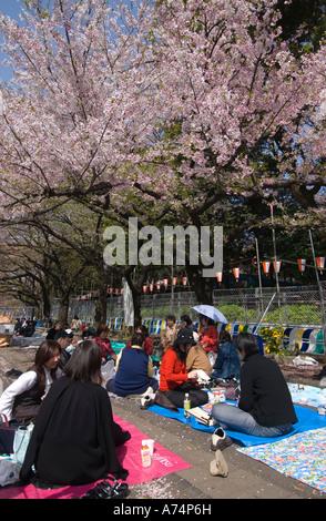 Pic-nic sotto la fioritura dei ciliegi nel Parco di Ueno Tokyo Giappone Foto Stock