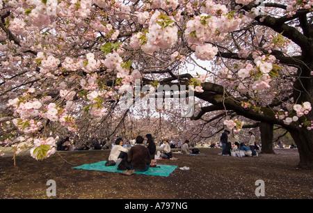 Le persone aventi un picnic sotto la fioritura dei ciliegi alberi a Tokyo Giappone Foto Stock