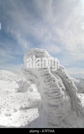 Snow mostri - alberi con neve congelate su di loro in inverno il Monte Hakkoda Giappone Foto Stock