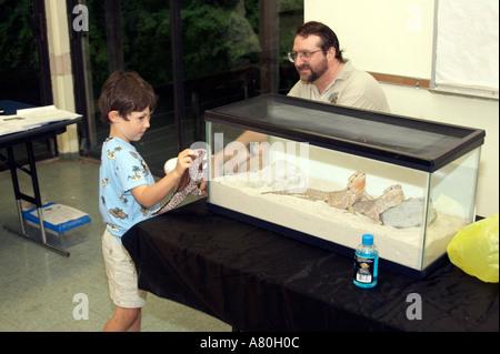 Un giovane ragazzo esamina due draghi barbuti in un acquario mentre si sta giocando con il suo giocattolo lizard Foto Stock