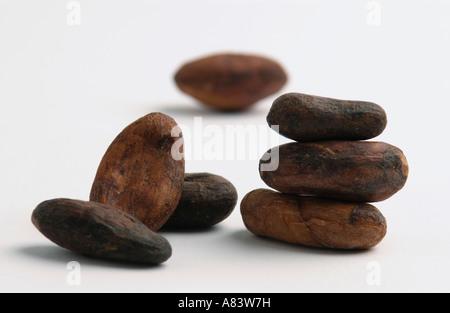 Le fave di cacao su sfondo bianco Foto Stock