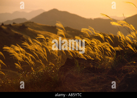 Tramonto su graminacee selvatiche- Tai Mo Shan Peak di Hong Kong Foto Stock