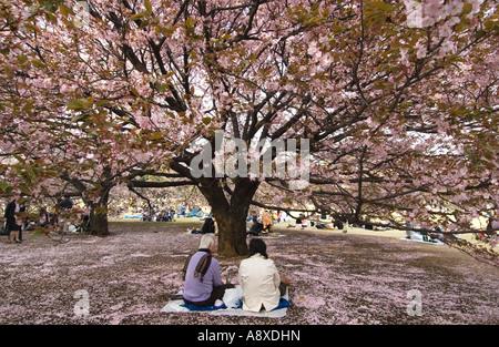 Una coppia di mezza età gode di sakura la fioritura dei ciliegi a Tokyo Giappone Foto Stock