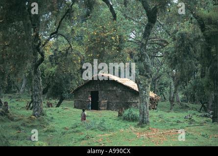 Insediamento di famiglia foresta di Harenna Bale Mountains National Park in Etiopia Foto Stock