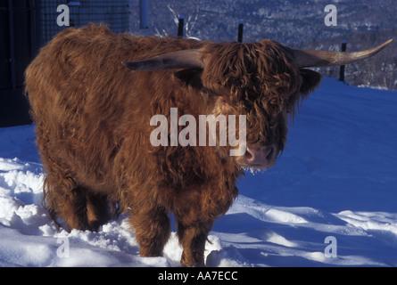 AJ4666, Vermont, VT, New England Foto Stock