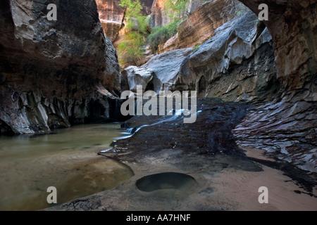 Metro nel parco nazionale di Zion
