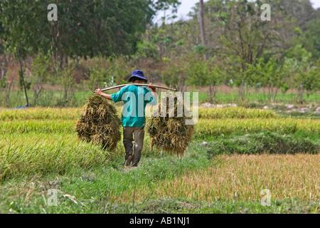 L uomo si porta il taglio fasci di riso sul polo di spalla Vietnam Foto Stock