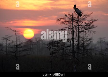 Sunrise oltre la palude nelle sagome di alberi woodstork e uccelli Everglades National Park Florida Foto Stock