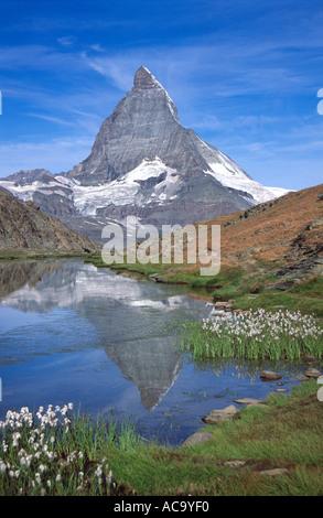 Erba di cotone e il Cervino riflesso nelle acque del Riffelsee, Vallese, Svizzera Foto Stock
