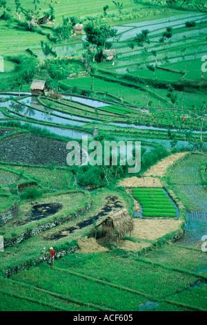 Capanne di paglia nel campo delle risaie a terrazze Bali Indonesia Foto Stock