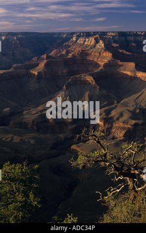 South Rim Grand Canyon preso dal punto Yaki tramonto con alberi e formazioni rocciose Arizona stato USA Foto Stock