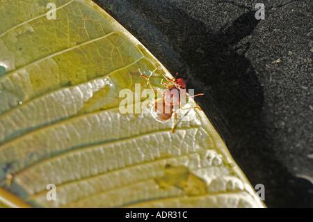 insetto incagliato Foto Stock