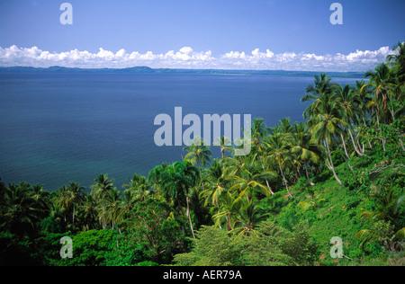 Palmtree Coconut Grove vicino al villaggio di Samana Repubblica Dominicana arcipelago delle Antille Maggiori dei Caraibi
