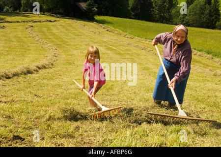 Austria, Salzburger Land, fieno raccolto Foto Stock