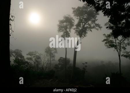 La mattina presto sunrise attraverso nebbie e nuvole nella foresta pluviale, Ghana, Africa occidentale