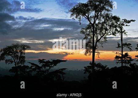 Alba sul tropicale della foresta pluviale africana con nebbia clearing, Ghana, Africa occidentale
