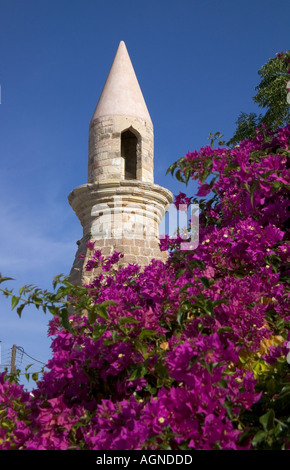 Dh città di Kos Grecia KOS minareto Torre fioritura viola tree bougainvillea bush