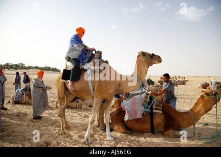 I turisti su un cammello Safari a Douz Tunisia Foto Stock